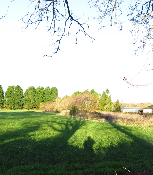Shadows on field