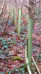 Tree shields