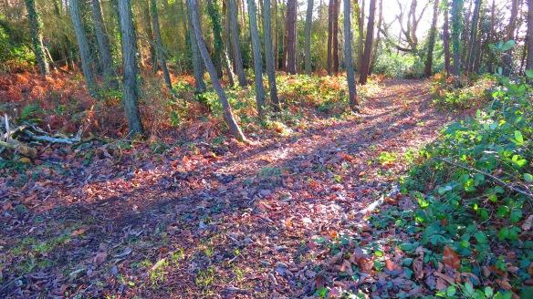 Woodland 6