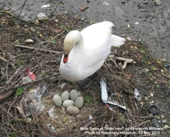 0-0-0-x773-mute-swan-litter-nest-12.05.13