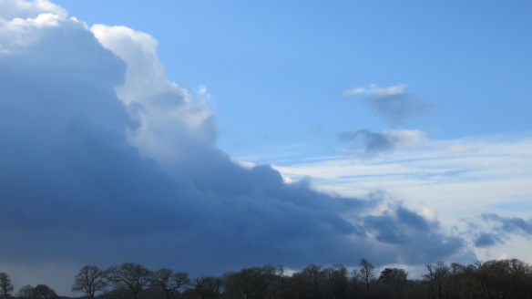 Cloudscape over trees