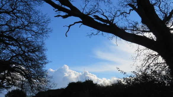Cloudscape with trees