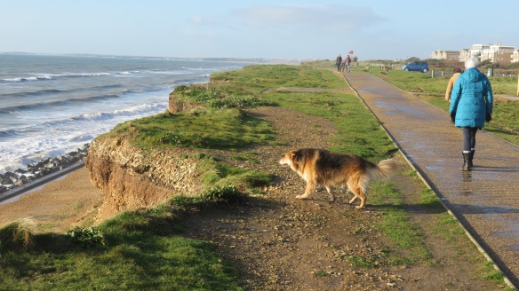 Dog on clifftop