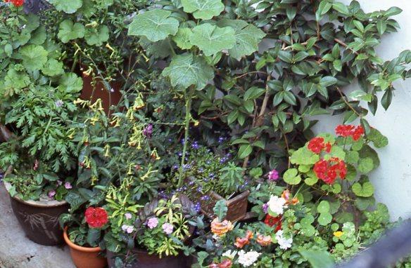 Garden Competition 7.08 003