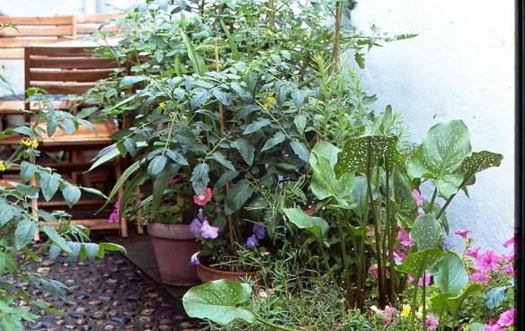 Garden Competition 7.08008