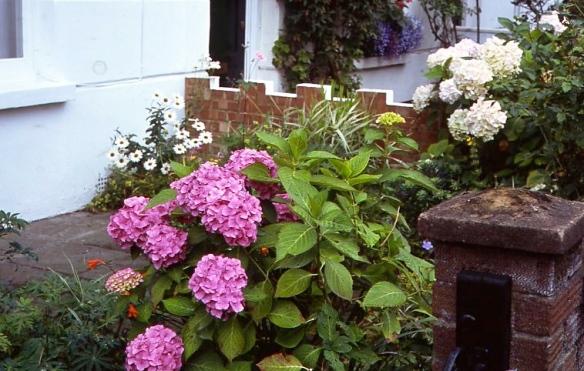 Garden Competition 7.08010