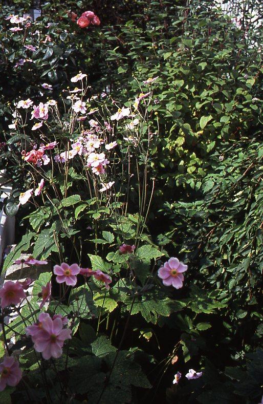 Garden Competition 7.08013