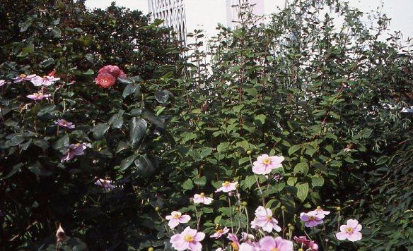 Garden Competition 8.08014