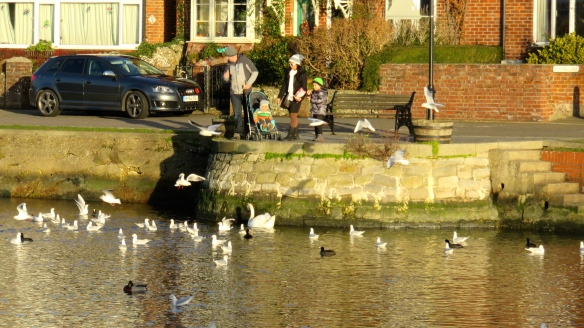 Gulls being fed 1