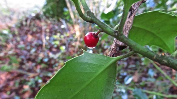 Holly berry raindrop