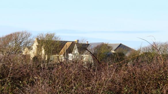 Houses through brambles