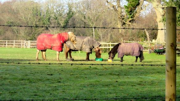 Ponies feeding
