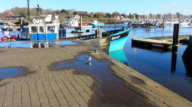 Quay with gull rflected