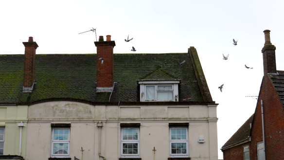 Rooftops with gulls