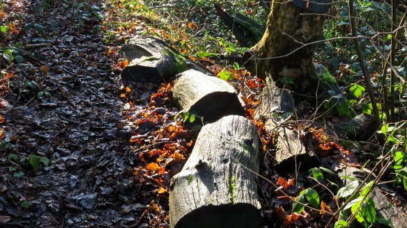 Sunlight on logs and fallen leaves
