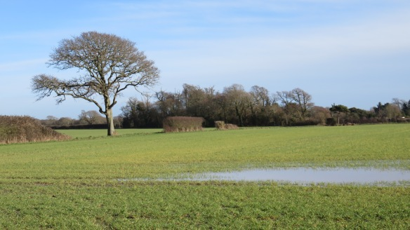 Tree in waterlogged field