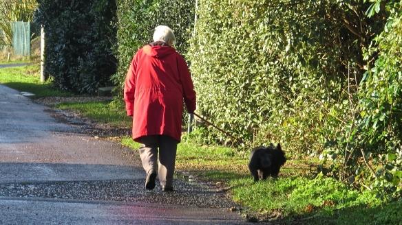 Woman walking terrier
