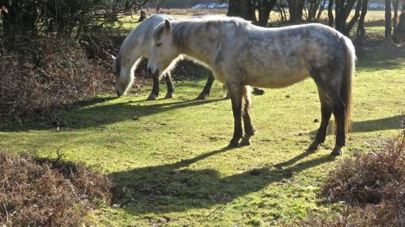 Dappled grey ponies