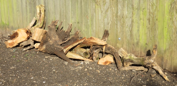 insect hotel relocated
