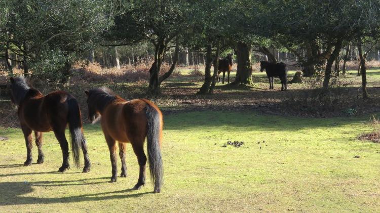 Ponies among trees
