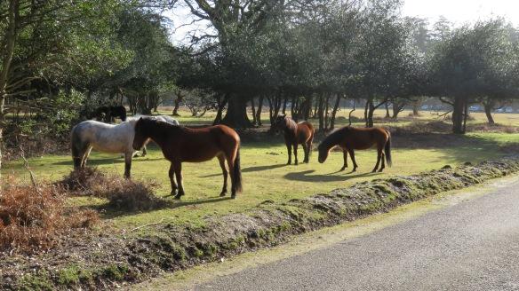 Ponies by roadside