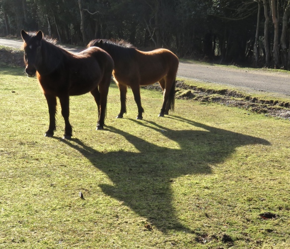 Ponies' shadows