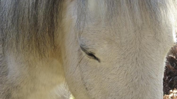 Pony's eye 1