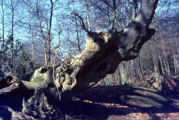 Tree 3.68 001