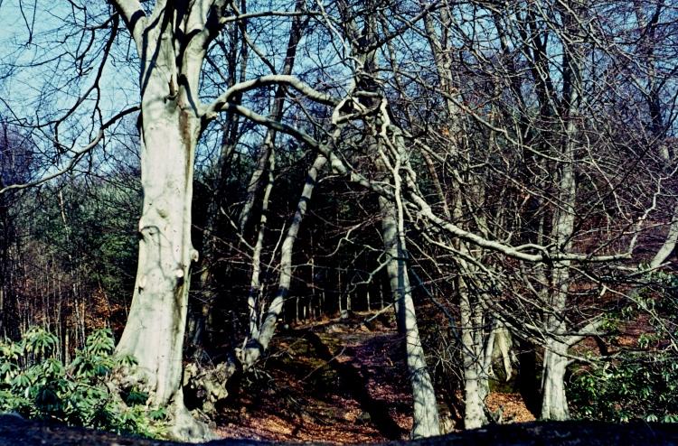 Trees 3.68 001