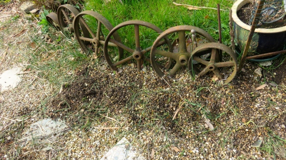 Allium raking