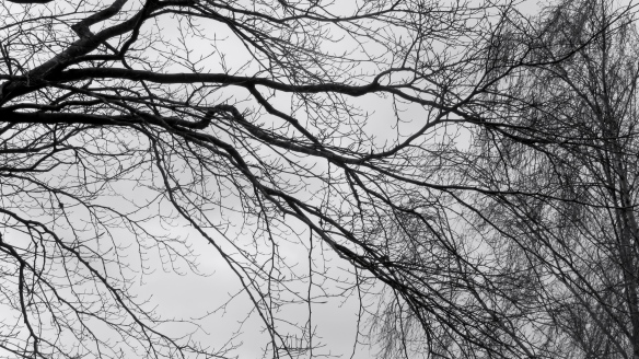 Beech and birch branches 2