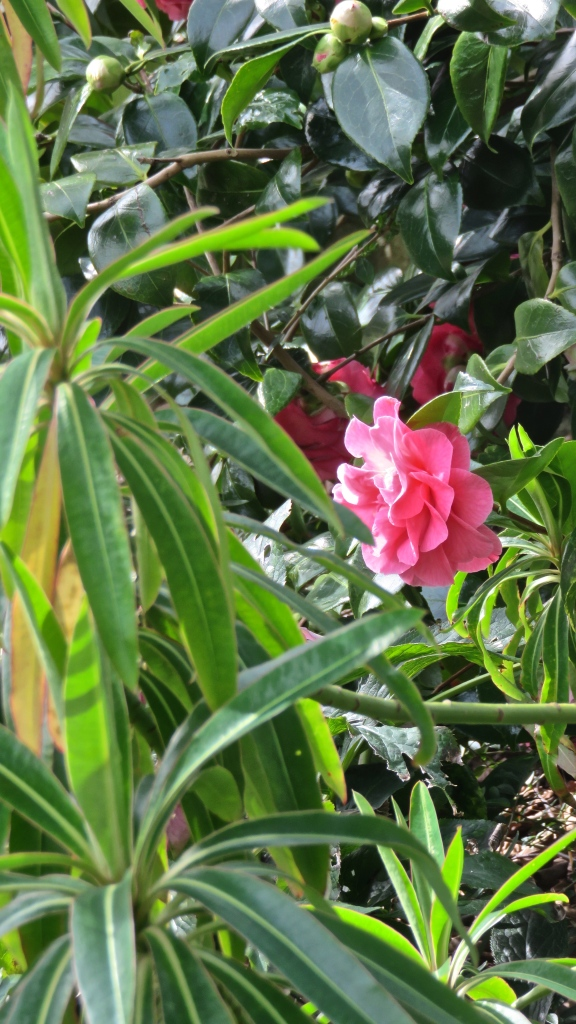 Camellia through euphorbia