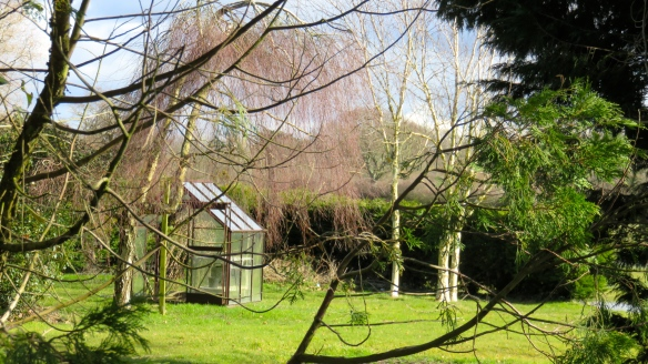 Greenhouse and trees
