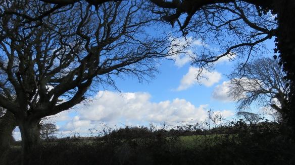 Landscape with bent oak 1