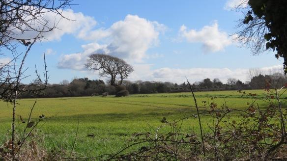 Landscape with bent oak 2