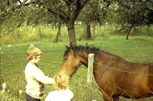 Michael, Matthew and horse 8.72