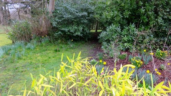 Path through shrubbery