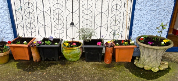 Planted tubs 1