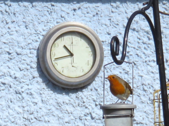 Robin and clock