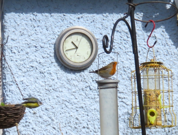 Robin, blue tit and clock