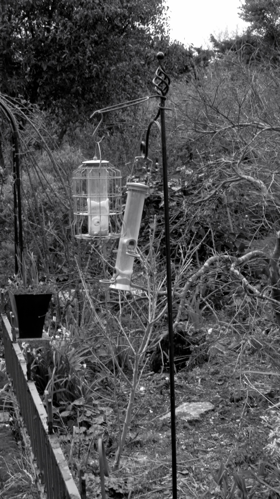 Windblown bird feeders