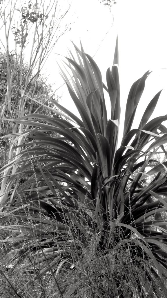 Windswept grass