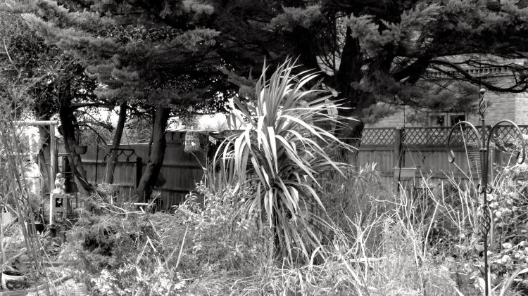 Windswept shrubbery