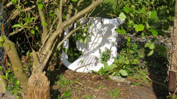 Chair through hedge