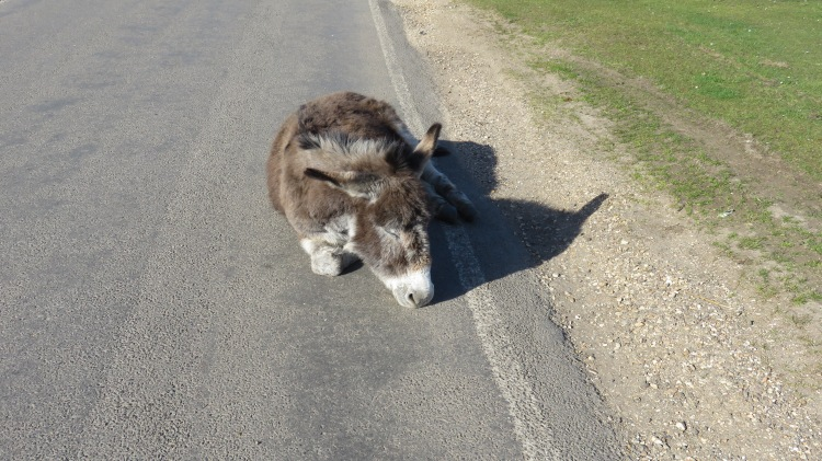 Donkey on road