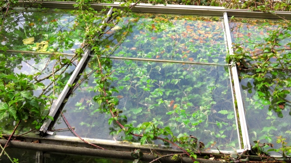 Greenhouse and brambles 2