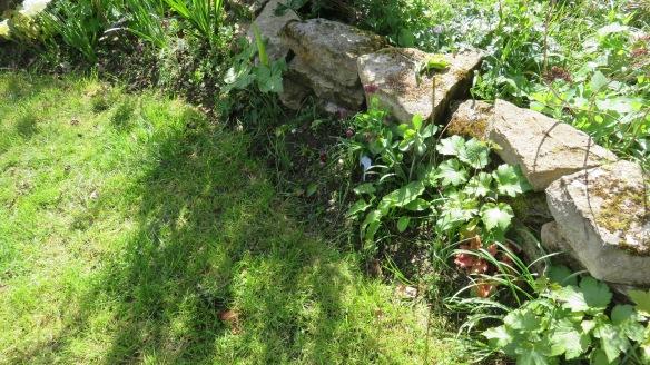 Lawn edge untidied