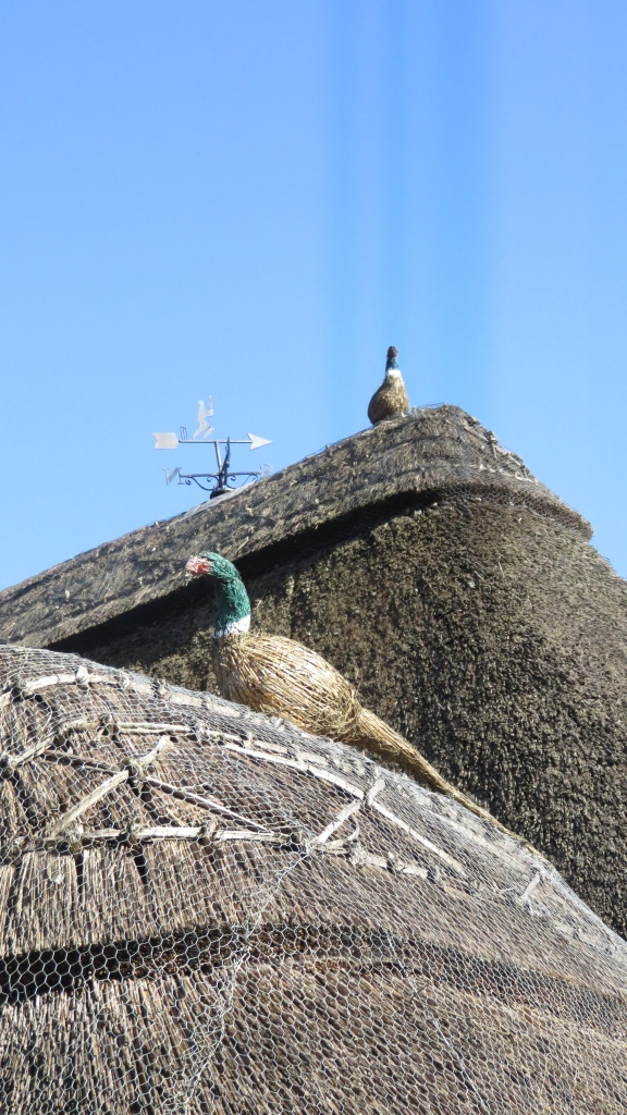 Pheasants on roof