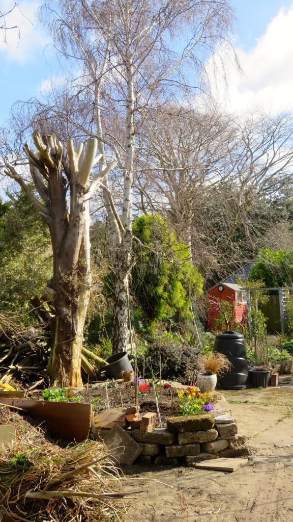 South corner of garden