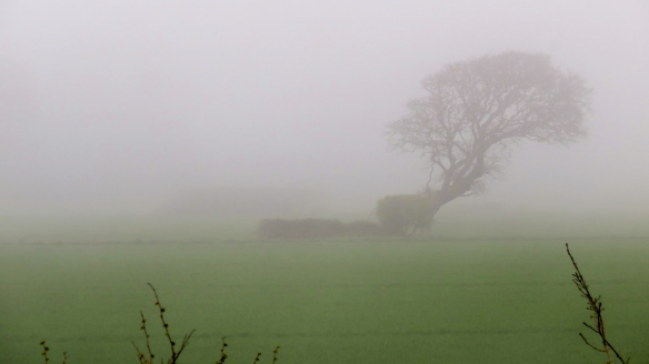 Tree in sea mist 1